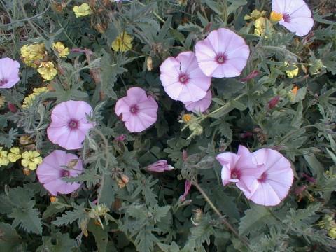 La flor y el lucifer chupando antes de aser el amor - 5 6